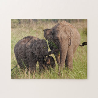 Indian Asian Elephant family in the savannah Jigsaw Puzzle