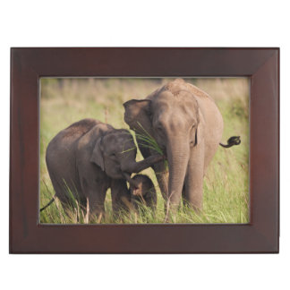 Indian Asian Elephant family in the savannah Keepsake Box
