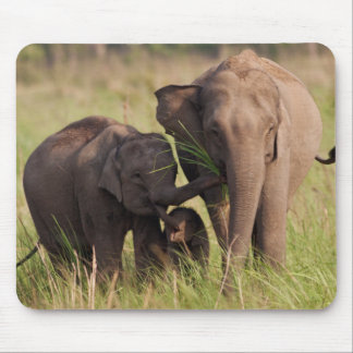 Indian Asian Elephant family in the savannah Mouse Mat