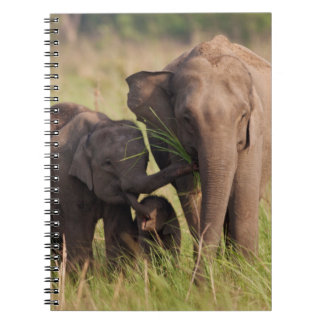 Indian Asian Elephant family in the savannah Notebooks