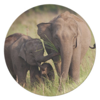 Indian Asian Elephant family in the savannah Plate