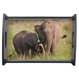 Indian Asian Elephant family in the savannah Serving Tray