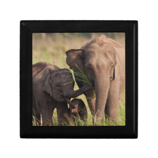 Indian Asian Elephant family in the savannah Small Square Gift Box