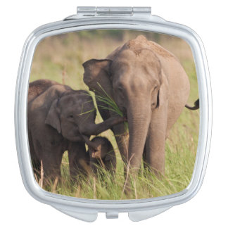 Indian Asian Elephant family in the savannah Vanity Mirror