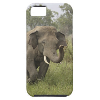 Indian / Asian Elephant greeting,Corbett Case For The iPhone 5