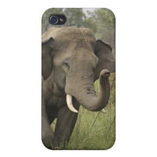 Indian / Asian Elephant greeting,Corbett iPhone 4 Covers