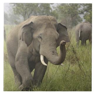 Indian / Asian Elephant greeting,Corbett Tile