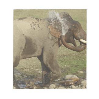 Indian / Asian Elephant spraying water,Corbett Notepad