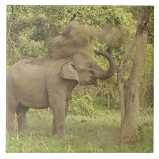Indian / Asian Elephant taking dust bath,Corbett Large Square Tile