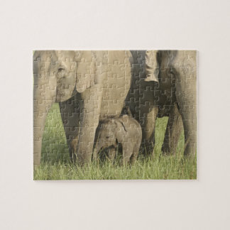 Indian / Asian Elephants and young one,Corbett Jigsaw Puzzle