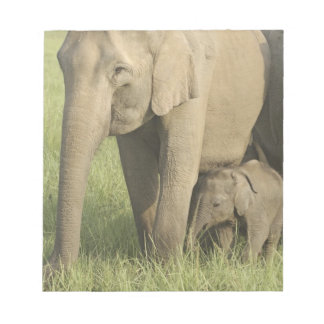 Indian / Asian Elephants and young one,Corbett Notepad