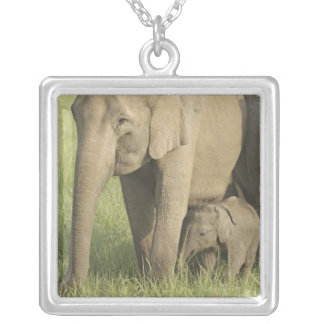 Indian / Asian Elephants and young one,Corbett Square Pendant Necklace