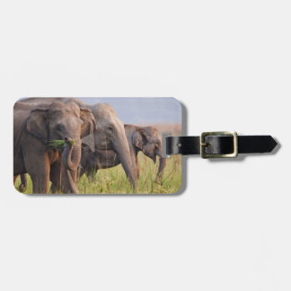 Indian Asian Elephants displaying grass Bag Tag