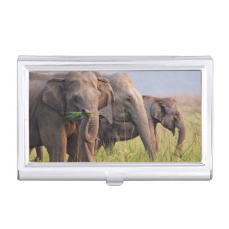 Indian Asian Elephants displaying grass Business Card Holder