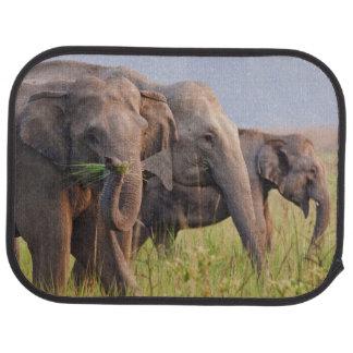 Indian Asian Elephants displaying grass Car Mat