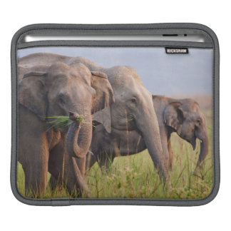 Indian Asian Elephants displaying grass iPad Sleeve