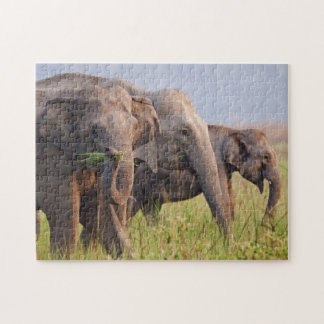 Indian Asian Elephants displaying grass Jigsaw Puzzle