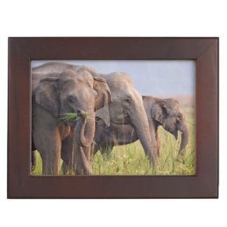 Indian Asian Elephants displaying grass Keepsake Box
