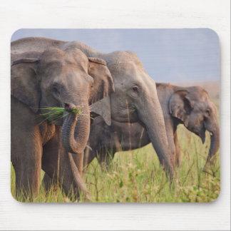 Indian Asian Elephants displaying grass Mouse Mat