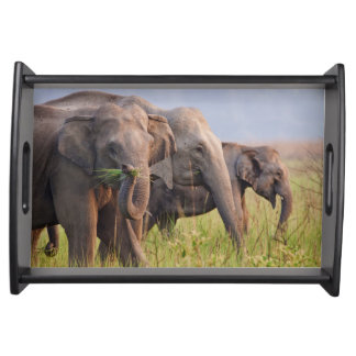 Indian Asian Elephants displaying grass Serving Tray