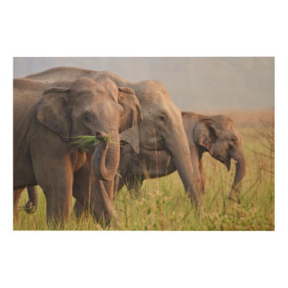Indian Asian Elephants displaying grass Wood Wall Art