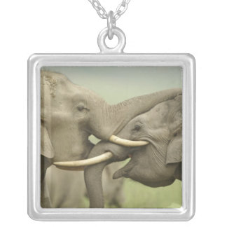 Indian / Asian Elephants play fighting,Corbett 2 Silver Plated Necklace