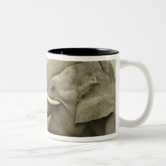 Indian / Asian Elephants play fighting,Corbett 2 Two-Tone Coffee Mug