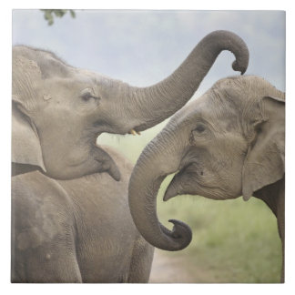 Indian / Asian Elephants play fighting,Corbett 3 Large Square Tile