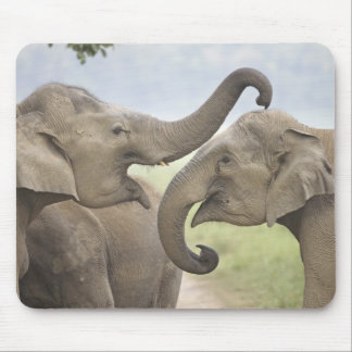 Indian / Asian Elephants play fighting,Corbett 3 Mouse Pad