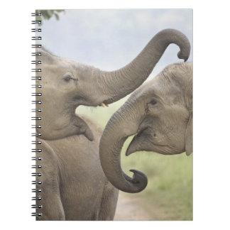 Indian / Asian Elephants play fighting,Corbett 3 Notebook