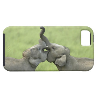 Indian / Asian Elephants play fighting;Corbett iPhone 5 Cover