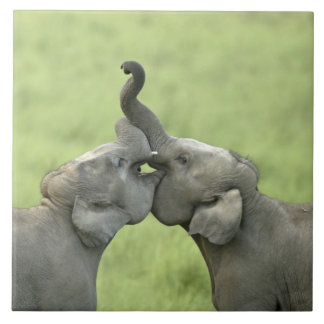 Indian / Asian Elephants play fighting;Corbett Large Square Tile