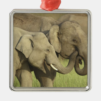 Indian / Asian Elephants sharing a Christmas Ornament