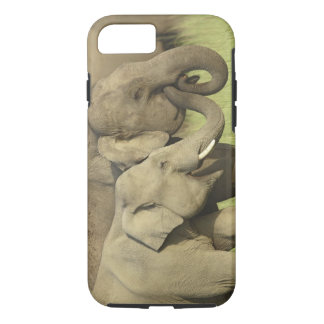Indian / Asian Elephants sharing a iPhone 8/7 Case
