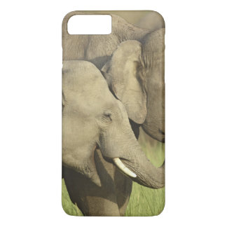 Indian / Asian Elephants sharing a iPhone 8 Plus/7 Plus Case