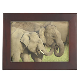 Indian / Asian Elephants sharing a Keepsake Box