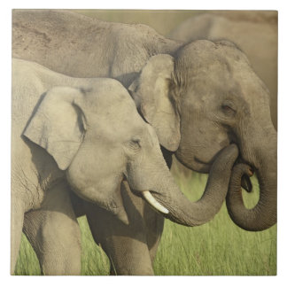 Indian / Asian Elephants sharing a Large Square Tile