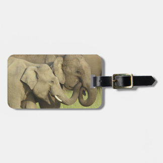 Indian / Asian Elephants sharing a Luggage Tag