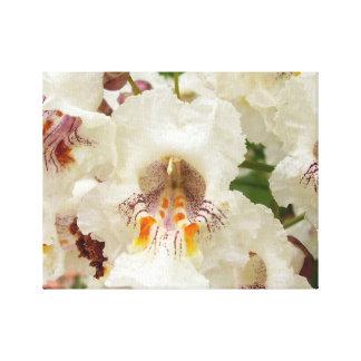 Indian Bean Tree Flowers Canvas Print