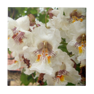 Indian Bean Tree Flowers Ceramic Photo Tile