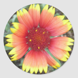Indian Blanket Flower Classic Round Sticker