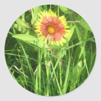 Indian Blanket Paper Products Stickers