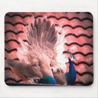 Indian Blue Fanned Female Peacock Mouse Pad