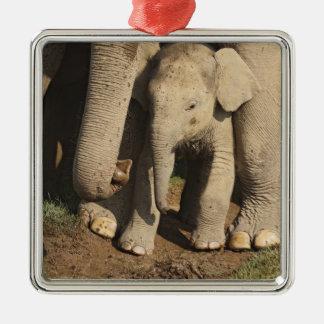 Indian Elephant calf,Corbett National Park, Christmas Ornament