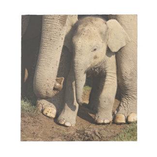 Indian Elephant calf,Corbett National Park, Notepad