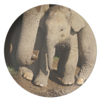 Indian Elephant calf,Corbett National Park, Party Plates