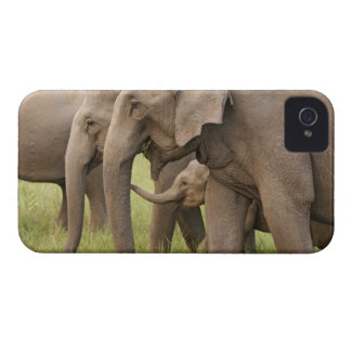 Indian Elephant calf playing with adults,Corbett iPhone 4 Cover