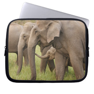 Indian Elephant calf playing with adults,Corbett Laptop Sleeve