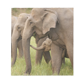 Indian Elephant calf playing with adults,Corbett Notepad