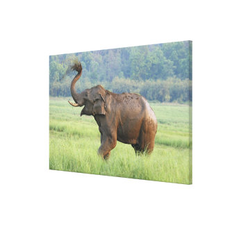 Indian Elephant dust bathing,Corbett National Stretched Canvas Prints